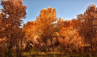 NEA_0320-7x5-Fall Color Tuli Creek