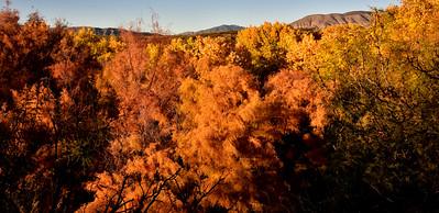 NEA_0327-Fall Color-Tuli Creek