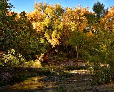 NEA_0286-Fall Color Tuli Creek