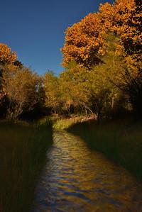 NEA_0298-Fall Color Tuli Creek
