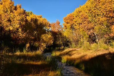 NEA_0291-Fall Color Tuli Creek