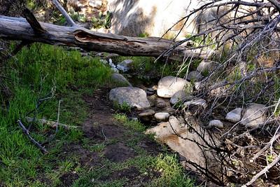 NEA_1219-Water-Pine Tree Trail