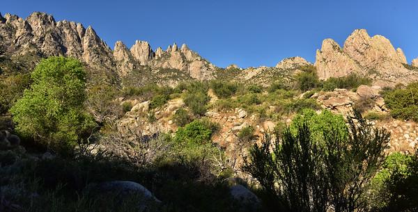 NEA_1221-Rabbit Ears-Pine Tree Trail