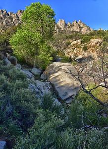 NEA_1222-Water-Pine Tree Trail