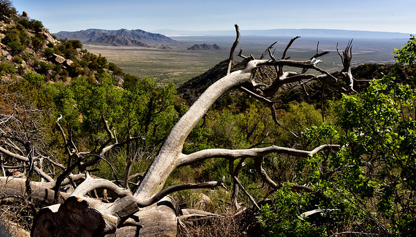 NEA_1248-Pine Tree Trail
