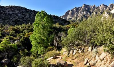 NEA_1218-Pine Tree Trail