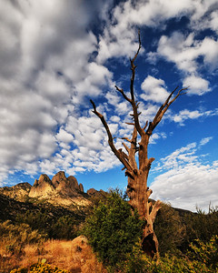 NEA_2455-16x20-Tree