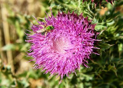 NEA_0320-7x5-Flower-Bug