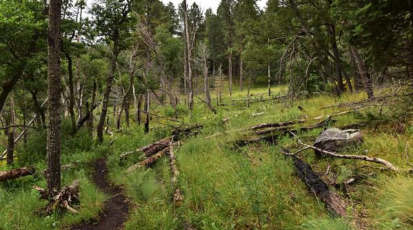 NEA_9477-Argentina Trail