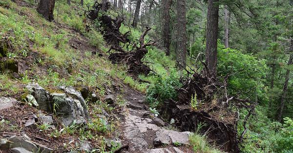 NEA_9482-Argentina Trail