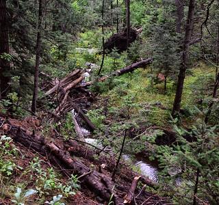 NEA_9485-Argentina Trail