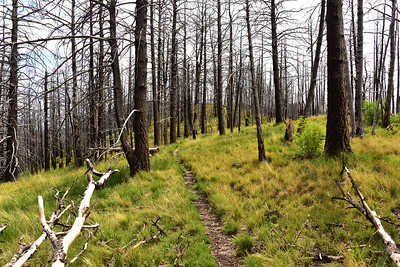NEA_0116-Crest Trail
