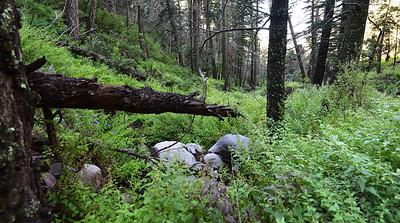 NEA_0269-Trail T-46
