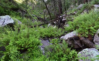 NEA_0268-Trail T46