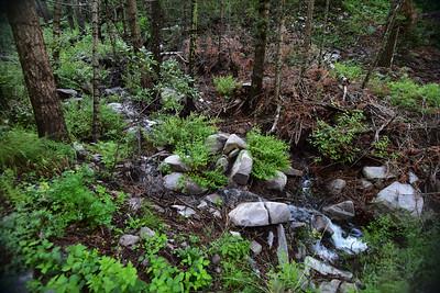 NEA_0267-Trail T46