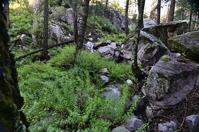 NEA_0272-Trail T46