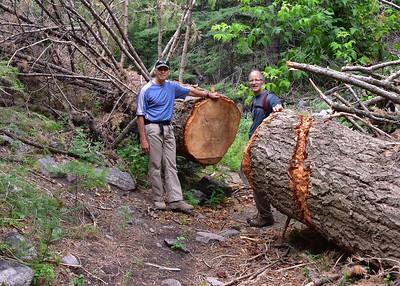 NEA_7414-7x5-Bill-Lee-Tree Cut