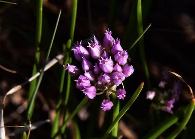 NEA_6112-7x5-Flower