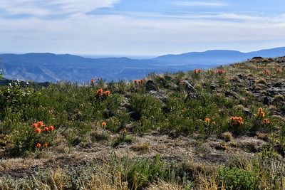 NEA_0529-Nogal Peak