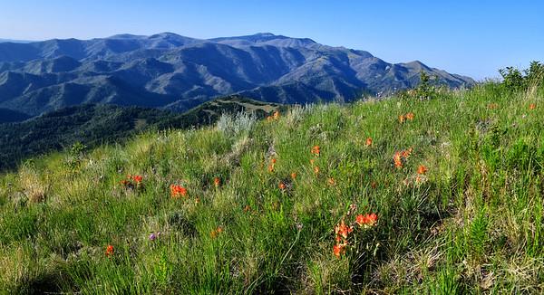 NEA_1063-Sierra Blanca from Nogal Peak