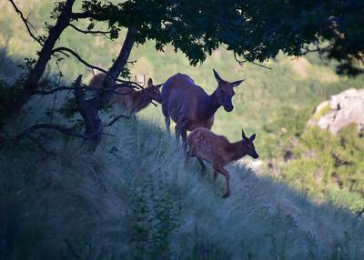 NEA_6033-7x5-Elk