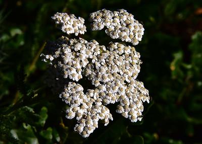 NEA_6133-7x5-Flowers