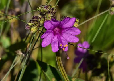 NEA_6117-7x5-Flowers