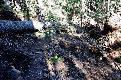 PEU_4648-6x4-Trail Damage