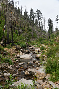NEA_0307-South Fork