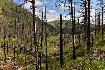 NEA_7761-South Fork Trail