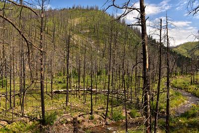 NEA_7762-South Fork Trail
