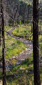 NEA_7764-South Fork Trail