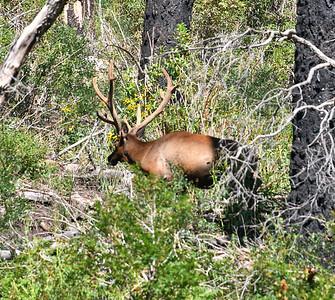 NEA_2370-Big Buck