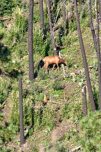 NEA_1290-Elk