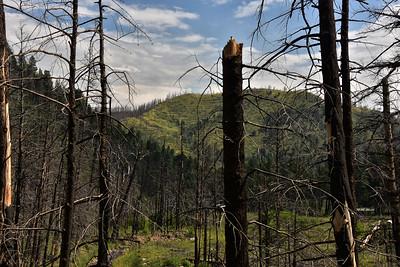 NEA_7763-South Fork Trail