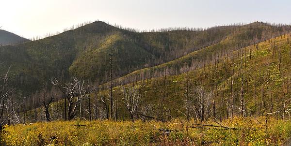 NEA_7097-Mills Canyon