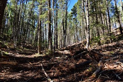 NEA_7548-Logging