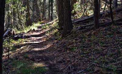 NEA_7535-Rim Trail