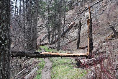 NEA_5834-Tree Fall