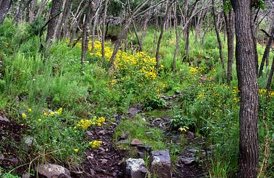 NEA_6062-Flowers Turkey Canyon