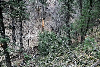 NEA_5833-Tree fall