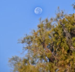 NEA_0614-Moon
