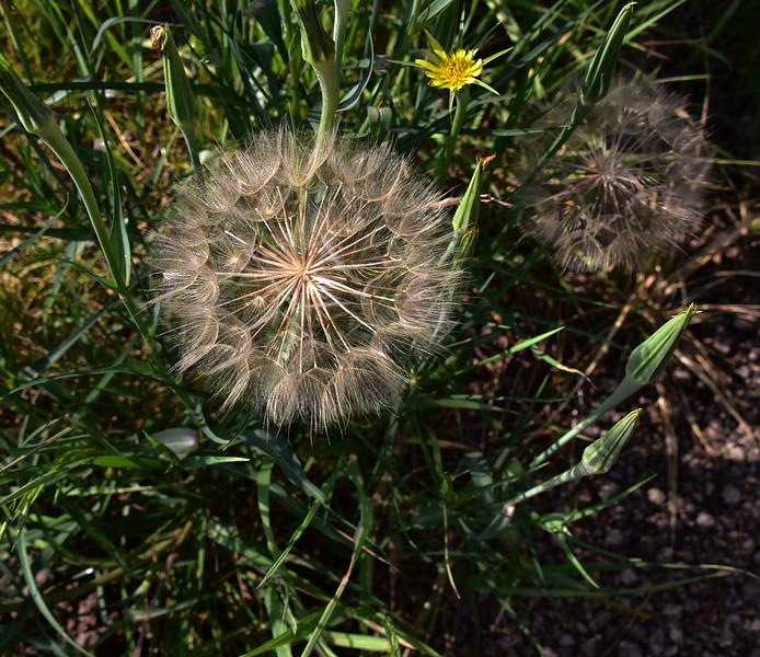 NEA_7757-Flower Seed