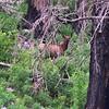 NEA_7715-7x5-Elk