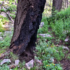 NEA_7728-Tree Burn