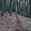NEA_7532-Rim Trail