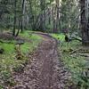 NEA_7533-Rim Trail