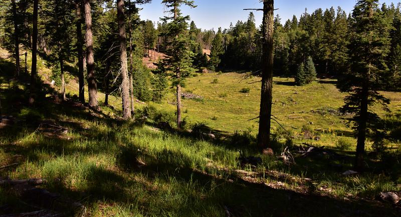 NEA_7543-Meadow-Rim Trail