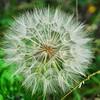 ALT_4062-10x8-Flower