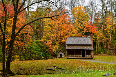 Autumn At Henry's Place